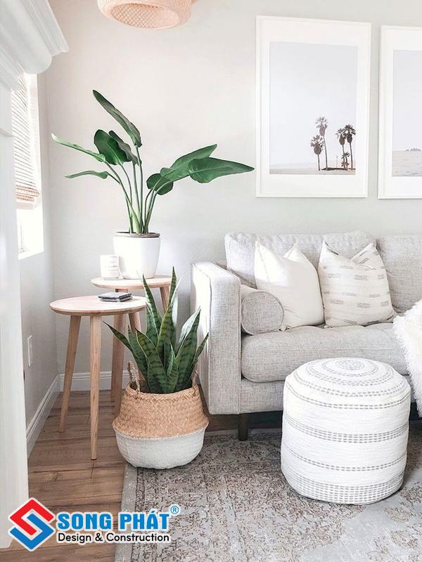 Hoặc để vài chậu cây kế bên ghế sofa như thế này cũng vô cùng đẹp mắt