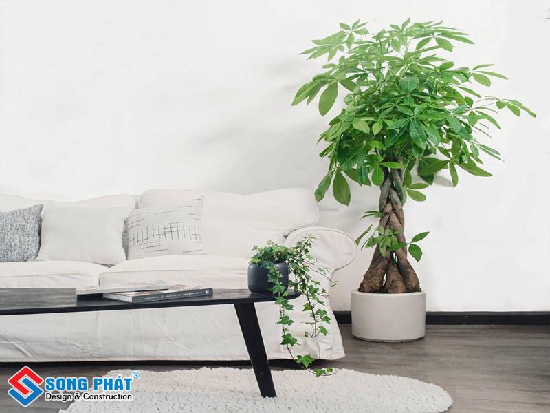 Đặt một chậu cây ở góc tường để trang trí cây xanh cho phòng khách